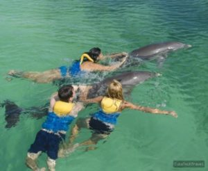 swimming-with-dolphin-cayo-largo_8