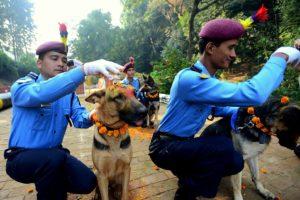 11-10-15-kukur-tihar-festival-in-nepal8