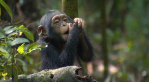 07-days-gorillachimps-wildlife-tracking-1600x1200