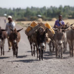 donkeys-ethiopia