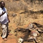 tanzania-skinned-donkeys