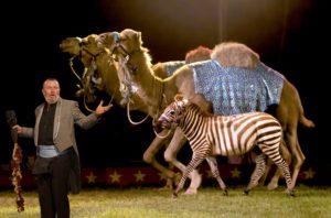 wild animals - circuses