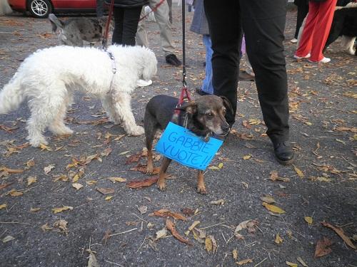 Corteo nazionale contro green hill e la vivisezione for Interno 4 montichiari