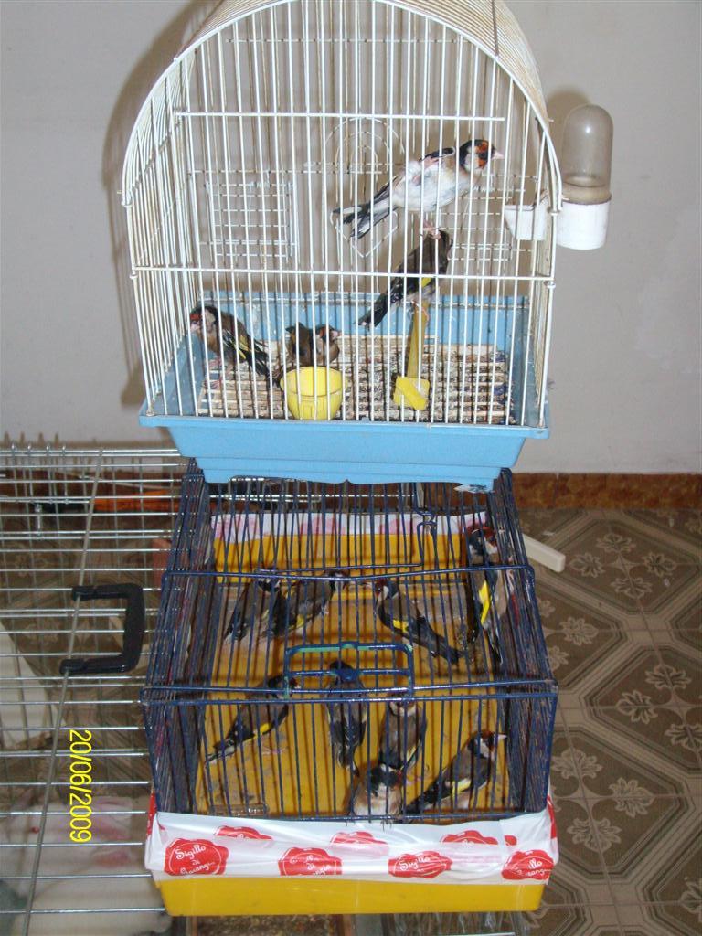 Oipa sezione napoli l 39 oipa napoli recupera diversi for Cani giocherelloni