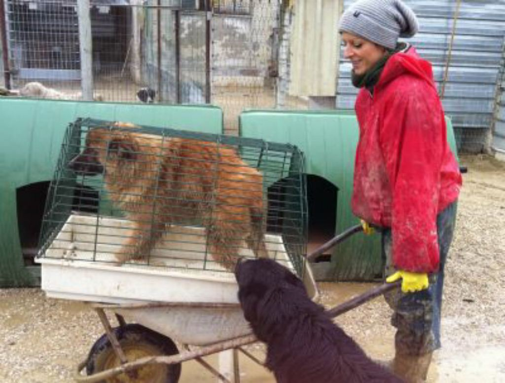 Oipa teramo l oipa teramo corre in aiuto del canile - Portare il cane al canile ...
