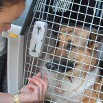 IL PARLAMENTO EUROPEO SANCISCE MIGLIORAMENTI  NEI TRASPORTI NON COMMERCIALI DEGLI ANIMALI D'AFFEZIONE