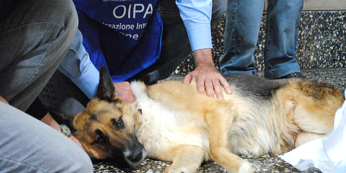 UKRAINE: FOOTBALL MATCHES FINISHED AND DOGS CONTINUES TO BE KILLED