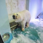 OIPA INTERNATIONAL ACTIONS: GRANDVIEW AQUARIUM, CHINA, ANOTHER SAD ZOO IN ASIA