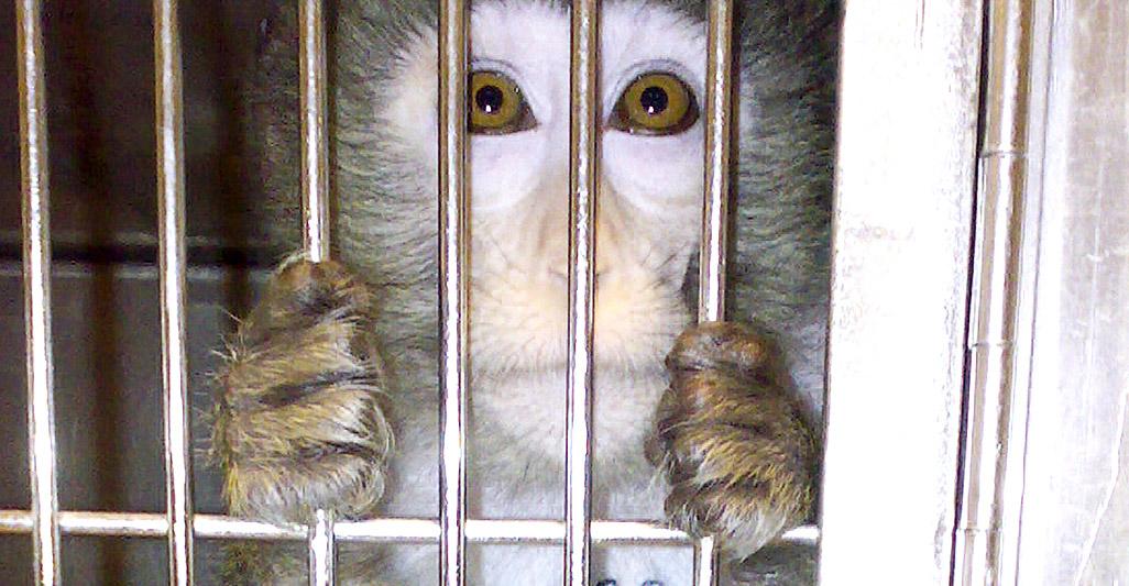 Stop vivisection: thanks a million!