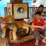 APPEAL TO THE TAMAN SAFARI: ANIMALS DOPED IN INDONESIAN SAFARI TO OFFER TOURISTS SOUVENIR SNAPSHOTS