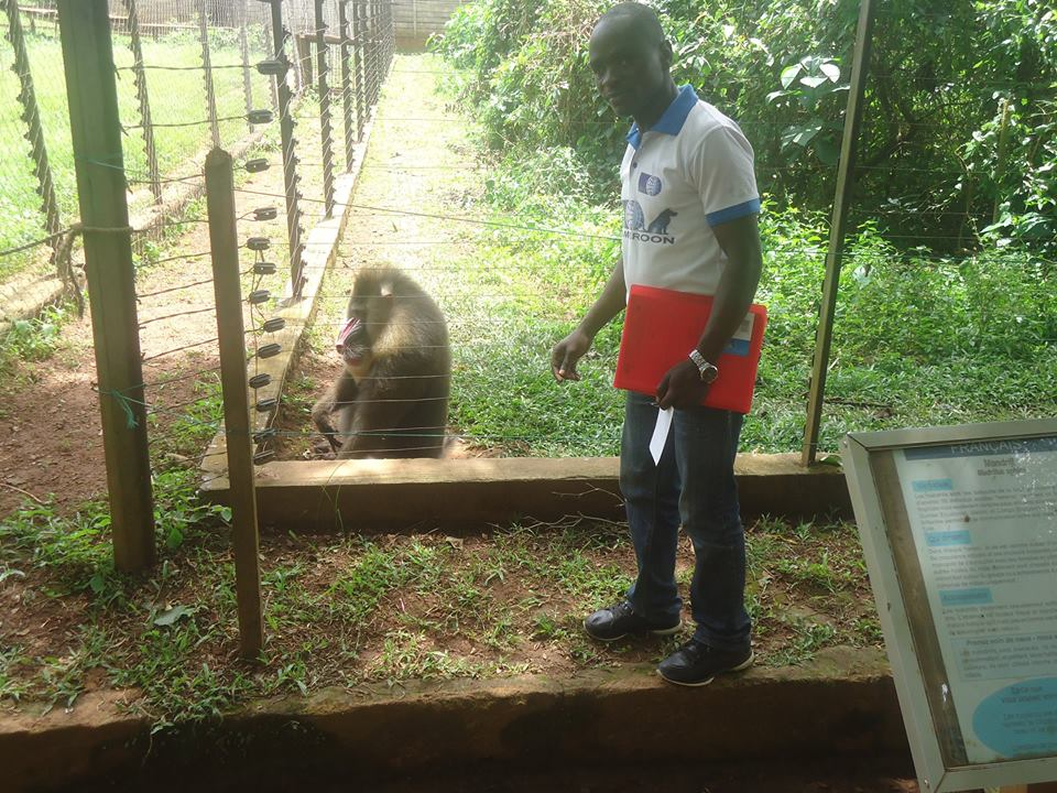 OIPA CAMEROON – A LIFE IN A CAGE: OVER 2.000.000 BIRDS HELD IN CAPTIVITY