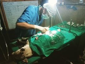 OIPA NEPAL – ANOTHER SPAY CAMPAIGN JUST STARTED IN KAVREPALANCHOK