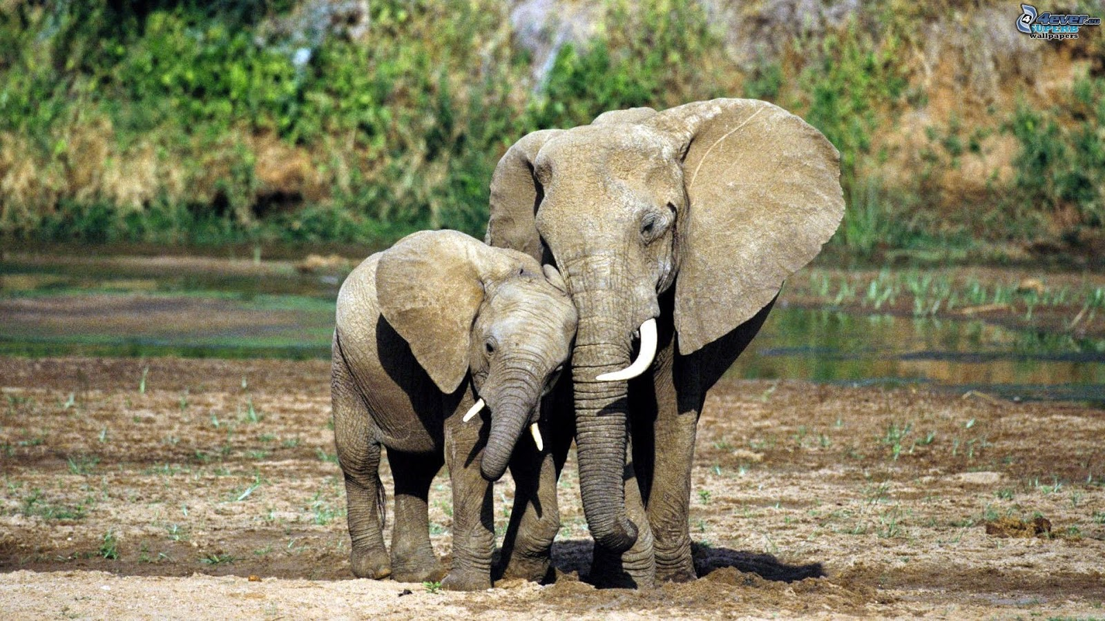 SAVE THE LAST ELEPHANTS, WE'RE RUNNING OUT OF TIME IVORY TRAFFICKING IN CAMEROON