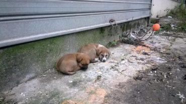 foto-puppy-1