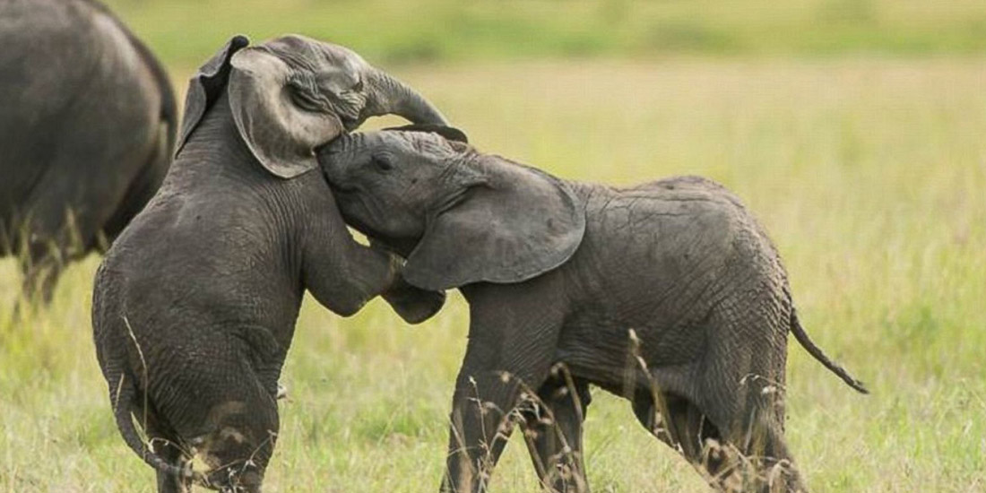 STAND FOR ELEPHANTS: WHAT YOU CAN DO