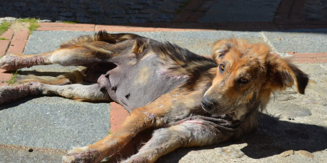 PETITION AGAINST CAT DOG MEAT TRADE