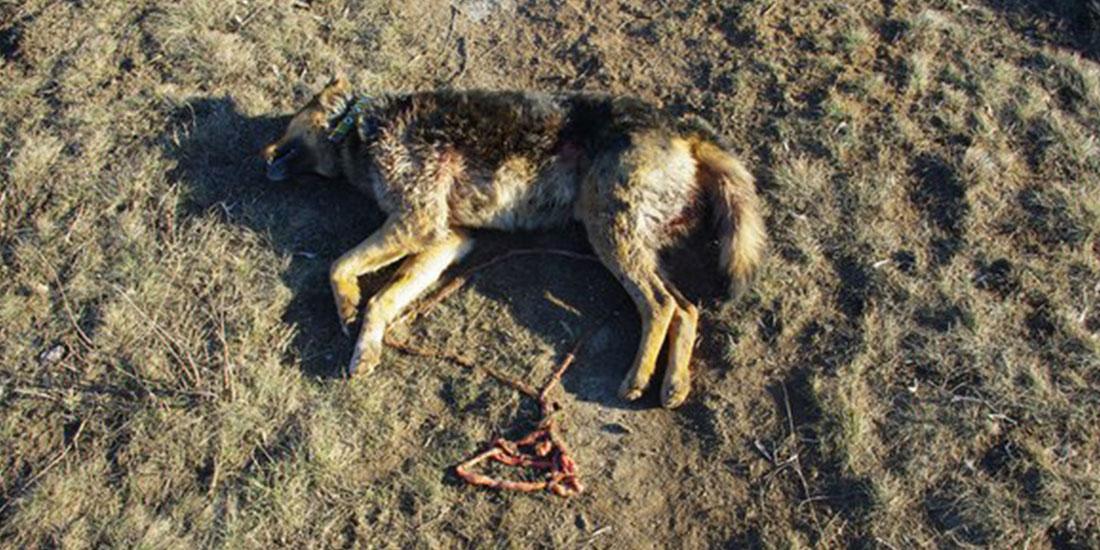 TWO DOGS KILLED NEAR GORLOVKA SHELTER FOR STRAY ANIMALS