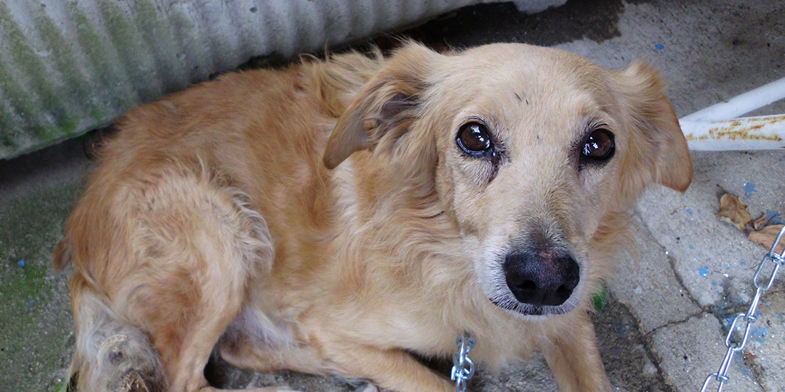 UKRAINE DOGS' MASSACRE STILL IN PROGRESS