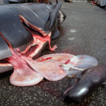 APPEAL TO THE FAROES AND DANISH GOVERNMENTS – STOP THE GRINDADRAP!