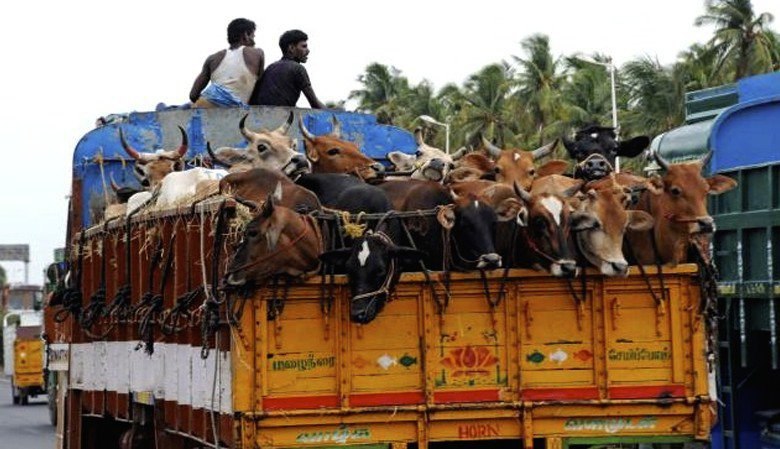 OIPA INDIA: THE FIGHT FOR ANIMAL WELFARE GOES ON