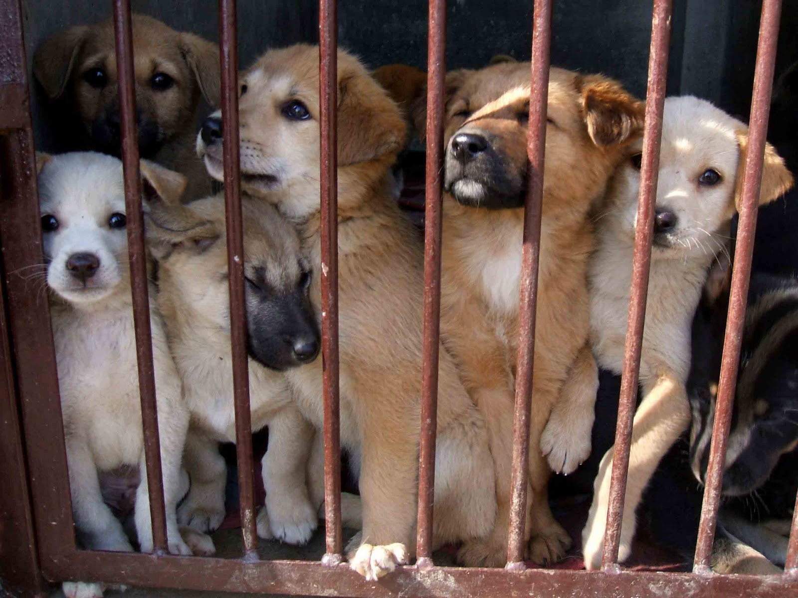 THE ILLEGAL TRADE OF PUPPIES IN EUROPE