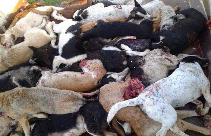 TUNISIA – A CRUEL WAY TO SOLVE THE STRAY PROBLEM – Send a letter of protest!