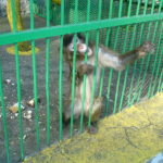 OIPA RECEIVED A SECOND AWFUL REPORT FROM BITOLA ZOO: THE VISITORS WERE SHOCKED