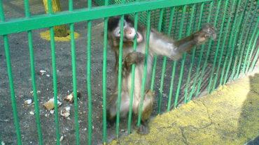800px-bitola_zoo_monkey