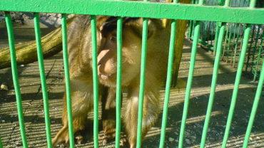 800px-bitola_zoo_monkey_2