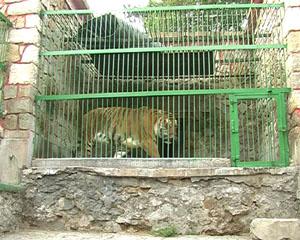 bitola-zoo-5