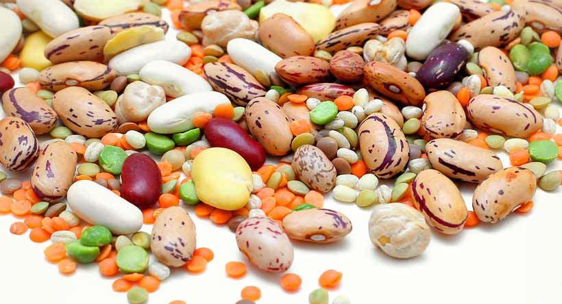 IRON VEG: THE IRON IN THE VEGAN DIET