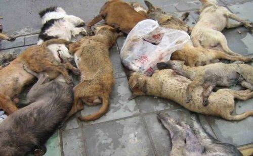 URGE KOSOVO GOVERNMENT TO STOP MASS KILLING OF STRAY DOGS