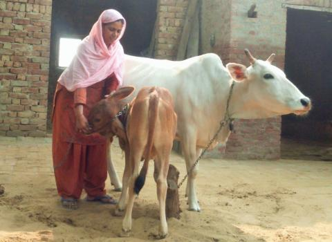 OIPA INDIA – LEGAL REQUEST TO HARYANA GOVERNMENT TO PROTECT STRAY ANIMALS AND COWS