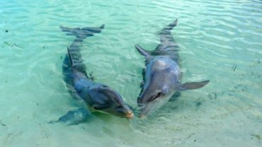 9-playa-sirena-swimming-with-dolphins