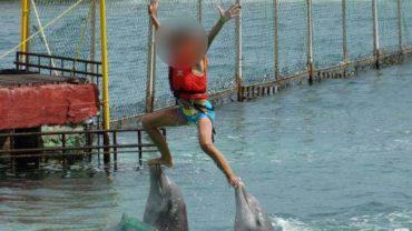 nado-con-delfines2