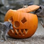 Tips on Protecting Animals From Halloween Hazards