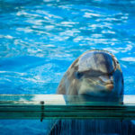 NEW DOLPHINARIUM OPENED IN SCOTTSDALE, ARIZONA: SEND A LETTER OF PROTEST!
