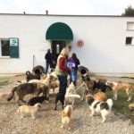 GREAT VICTORY FOR OIPA SWITZERLAND – STRAY COCO The Veterinary Chamber of Kosovo AGREED TO CNVR PROJECT!