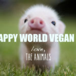 November, 1st: WORLD VEGAN DAY