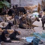 Dog meat threatening Public Health in China