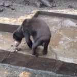 BANDUNG ZOO, INDONESIA – OIPA ASKS TO THE GOVERNMENT to enforce its own standards for zoo licencing – SIGN THE PETITION!