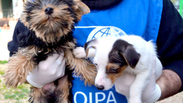 oipa-seized-puppies