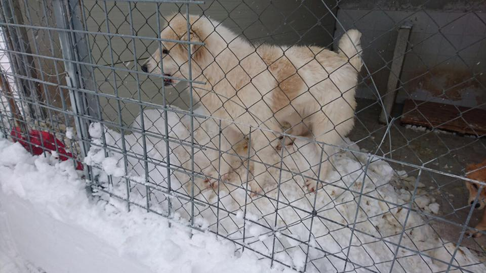 STILL ON EARTHQUAKE AREAS: OIPA VOLUNTEERS HELPING ANIMALS HIT BY THE COLD WAVE
