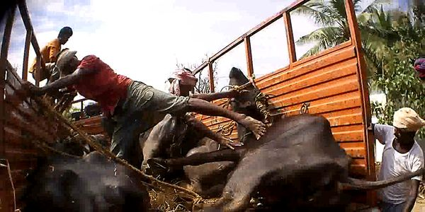 Regulate the livestock Markets in India