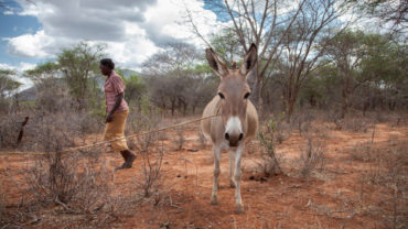 africa-donkey