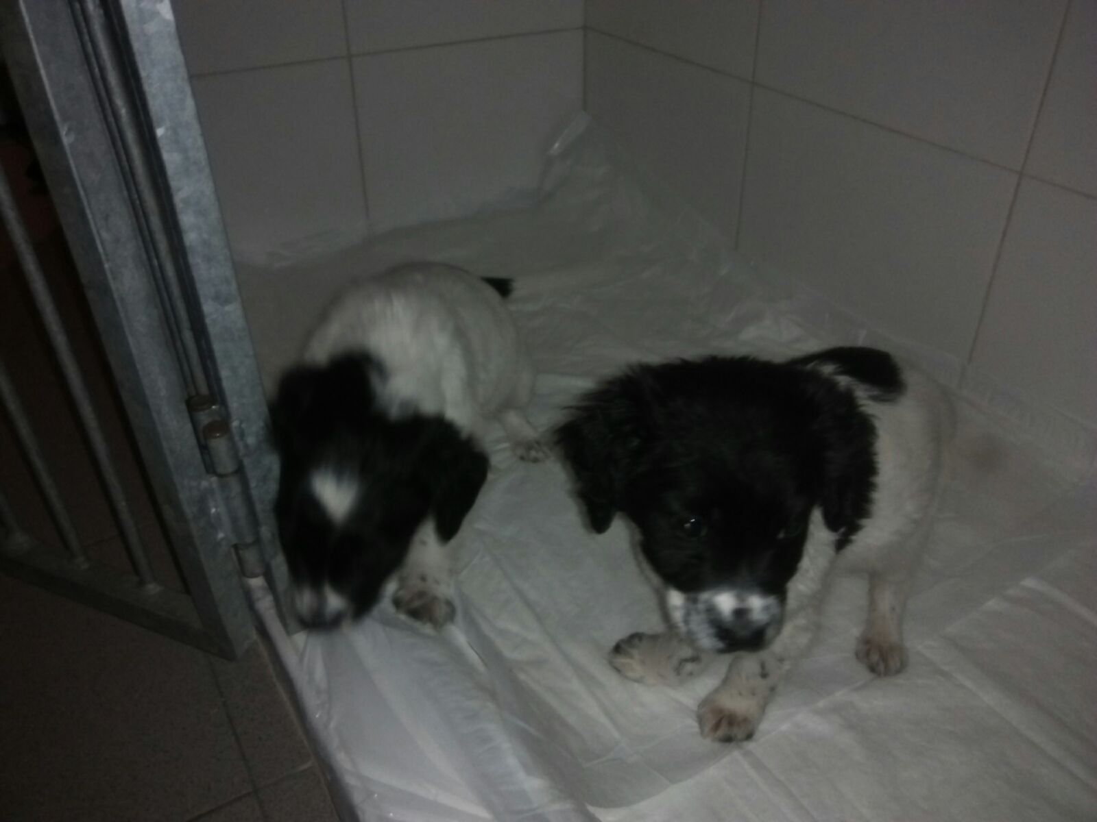 IGNORANCE THAT KILLS: TORN FROM THEIR MOTHER'S CARE AND SENTENCED TO DIE, THELMA AND LOUISE WERE SAVED FROM OIPA ANIMAL GUARDS, BUT THEY STILL NEED HELP.