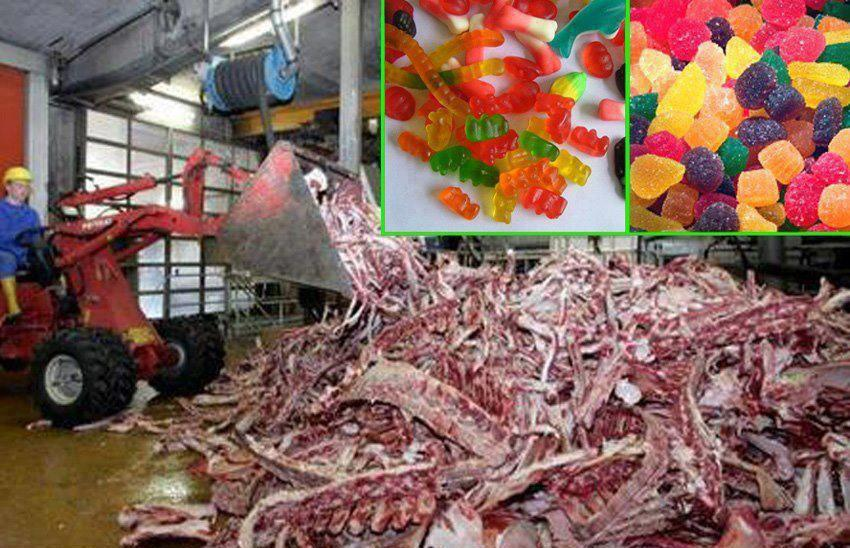 Do you know what gelatin is made of?