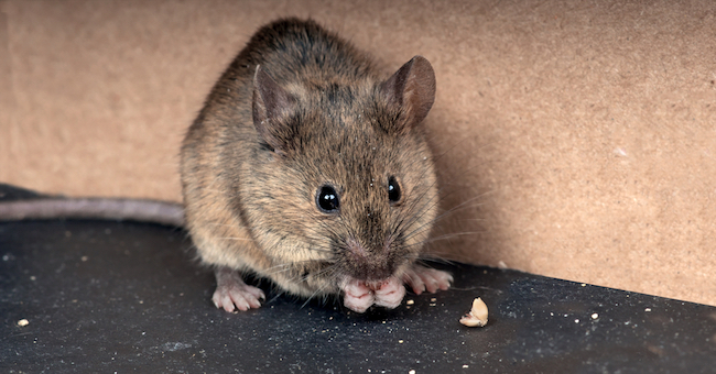 OIPA INDIA SENT A GRIEVANCE TO THE MINISTRY OF RAILWAYS ADVOCATING FOR MOUSE BEING KILLED WITH ILLEGAL GLUE TRAPS