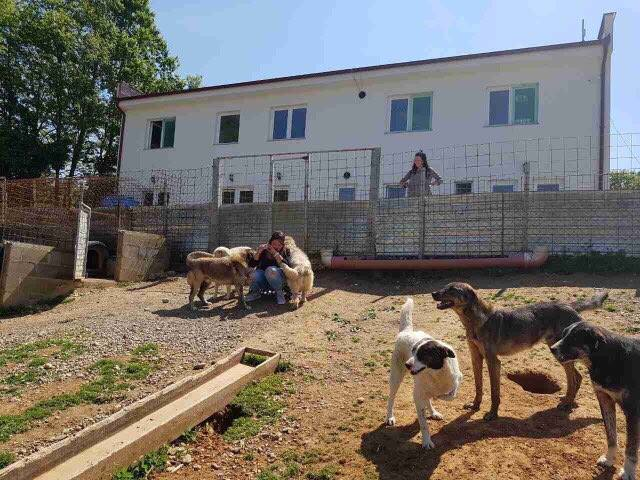 TREATMENT AND CASTRATION OF STRAY DOGS IN KOSOVO
