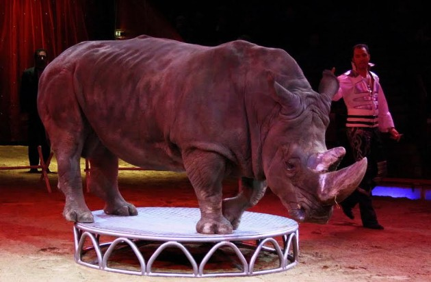 WILD ANIMALS IN TRAVELLING CIRCUSES: THE SCOTLAND CASE